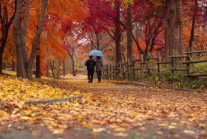 Couple Old Autumn Feel Leaves