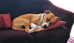 Dog Sleep Asleep Nap Animals Zen
