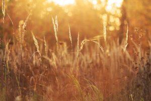 Nature Grass Sun S%C%o%C%ce Sunny