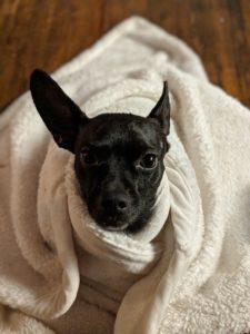 Snuggle Warm Blanket Safe