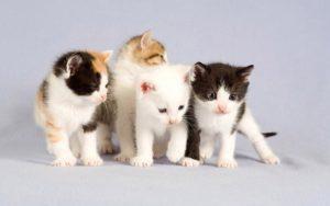 Cats Animals Eyes Pet Kitten Cute