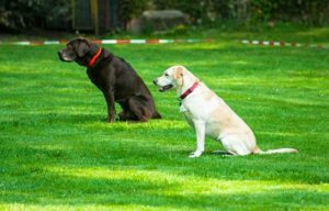 Dog Seat Seat Exercise Obedience