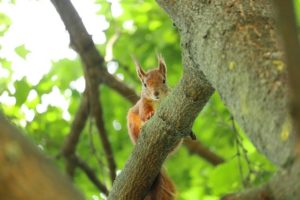 Squirrel Cute Squirrel Fat Squirrel