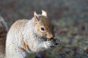 Squirrel Nature Cute Animal Mammal