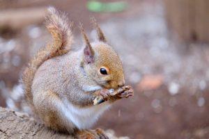 Squirrel Nature Wild Animal Eating