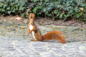 The Squirrel Ruda Park Animal Kita